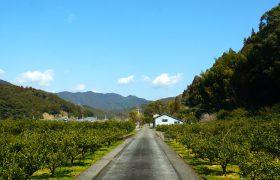 西日本最大の森林鉄道が駆け巡った地域の物語が『日本遺産』に認定